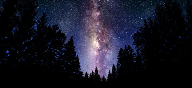 The milky way seen across the sky framed by pine trees
